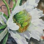"""Cereus Exuberance"" - SOLD"